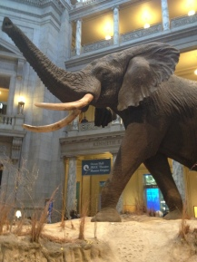 The Elephant of Natural History