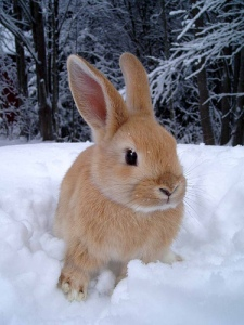 Easily the cutest snow bunny of them all (Holy Taco)