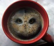 Who, who, who sees an owl in my coffee? (Tomas)