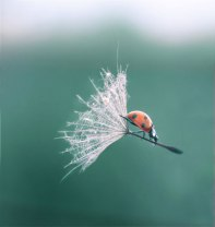 Windsurfing for insects (Lentilcia/Deviant Art)